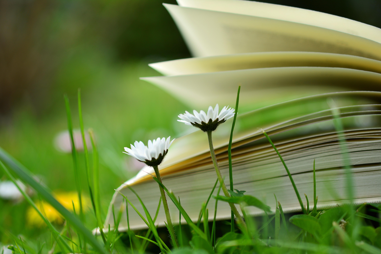 كتاب مجاني من لبيه .. حكم خالدة في التحفيز وتطوير الذات